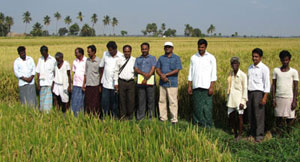 Group of rice farmers in India