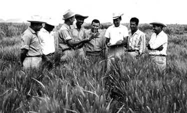 Borlaug in field with trainees