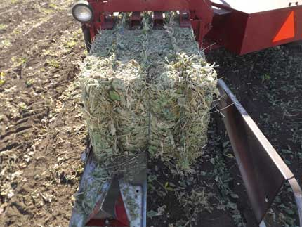 Bale of soybean hay