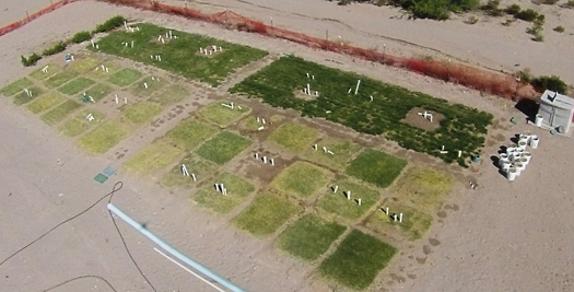 Aerial view of turfgrass plots