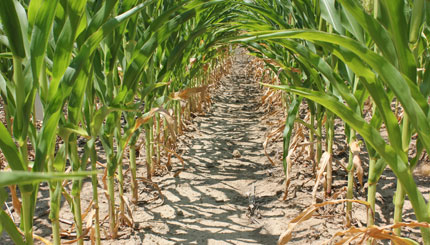 Can simple measures of labile soil organic matter predict ...