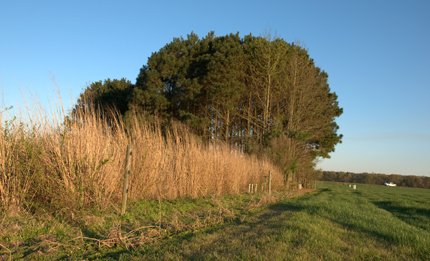 Trees and switchgrass buffer riparian plots