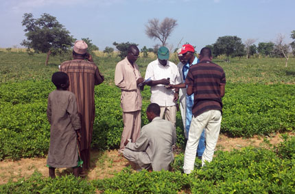 Evaluación de suelo en campo por investigadores en NIger