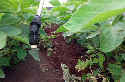 Pulverización de bacterias inoculantes en plantas de soja.