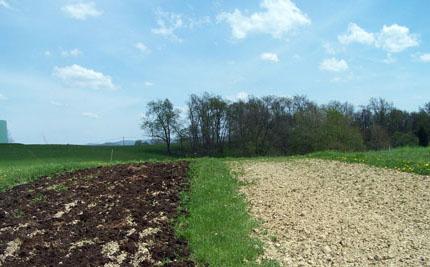 Parcelas con estiércol y sin estiércol listas para ser plantadas con césped.