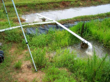 Una tubería de pvc en forma de T transporta el agua desde una zanja rectangular hasta un área de retención más pequeña rodeada de plantas de arroz.