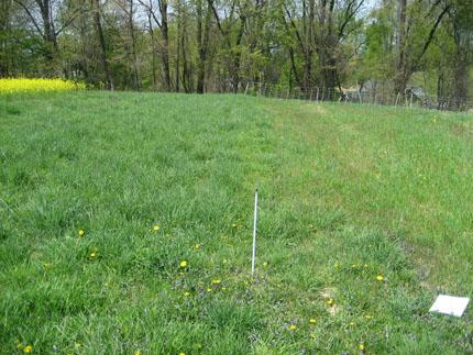Comparación de parcelas de leguminosas herbáceas izquierdas con estiércol, parcela derecha sin estiércol