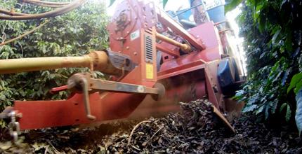 Una máquina de naranja recoge bayas de café del suelo.  A cada lado hay cafés verdes de bajo crecimiento.