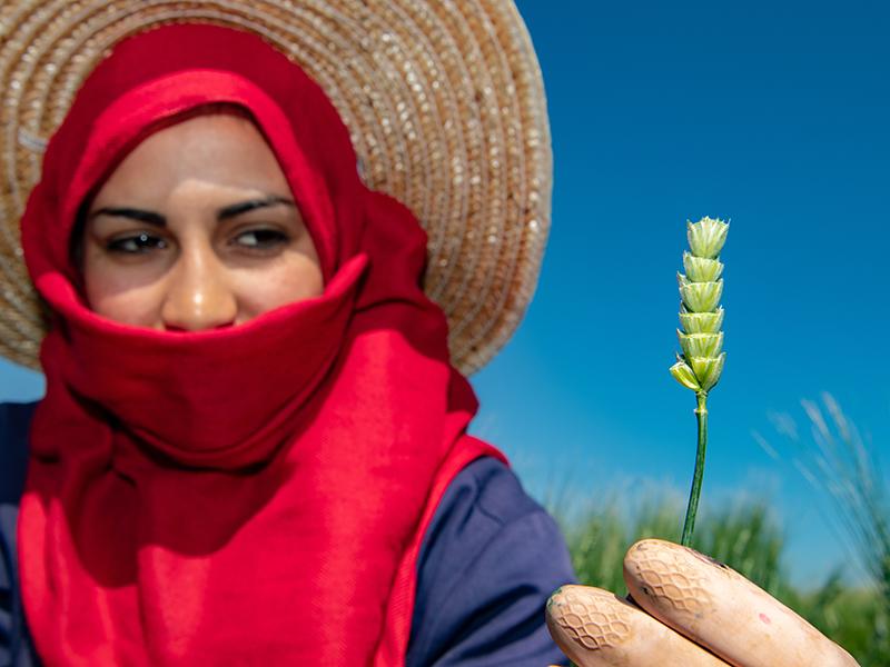 mujer sosteniendo tallo de trigo