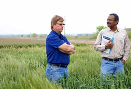 Researchers in wheat field, Texas