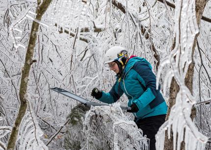 Investigador midiendo la acumulación de hielo arbóreo en el bosque.