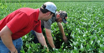 Dos personas mirando cultivos