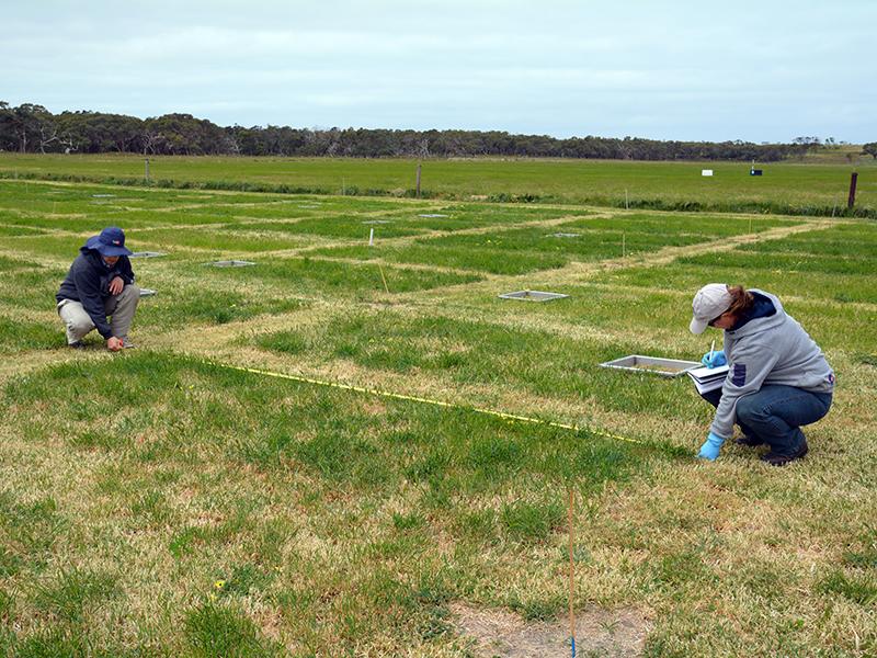Investigadores tomando medidas en áreas verdes