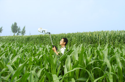 Un investigador en un campo de maíz tan alto como sus hombros usa un pequeño dispositivo blanco unido a un palo de metal.  Lo sostiene por encima de su cabeza y lo mira.