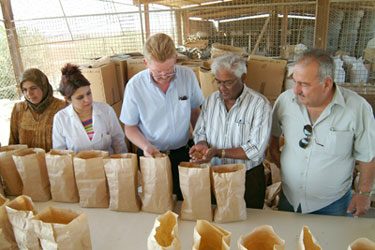Rajaram and researchers with bags of wheat