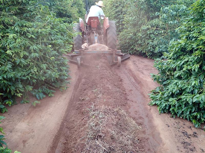 Productor de café en tractor preparándose para la cosecha limpiando el suelo cerca y debajo de las plantas.