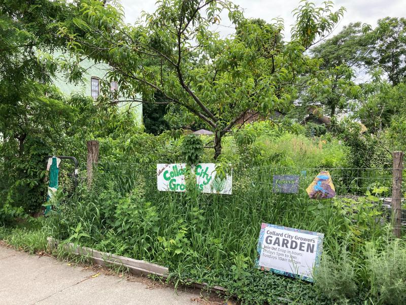 jardín comunitario urbano con sendero para caminar, flores, árboles y letreros