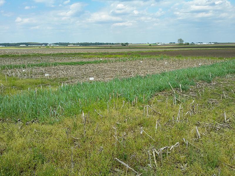 Campo con cultivos de cobertura creciendo