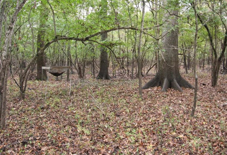 Red oak bottomland forest